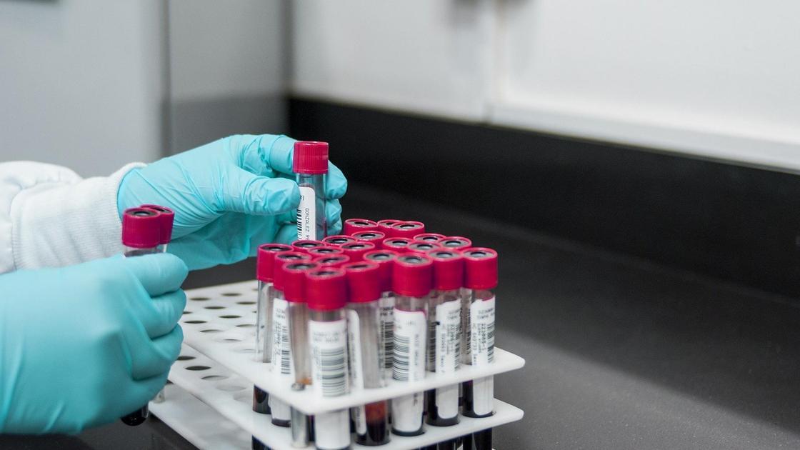Руки лаборанта держат пробирки