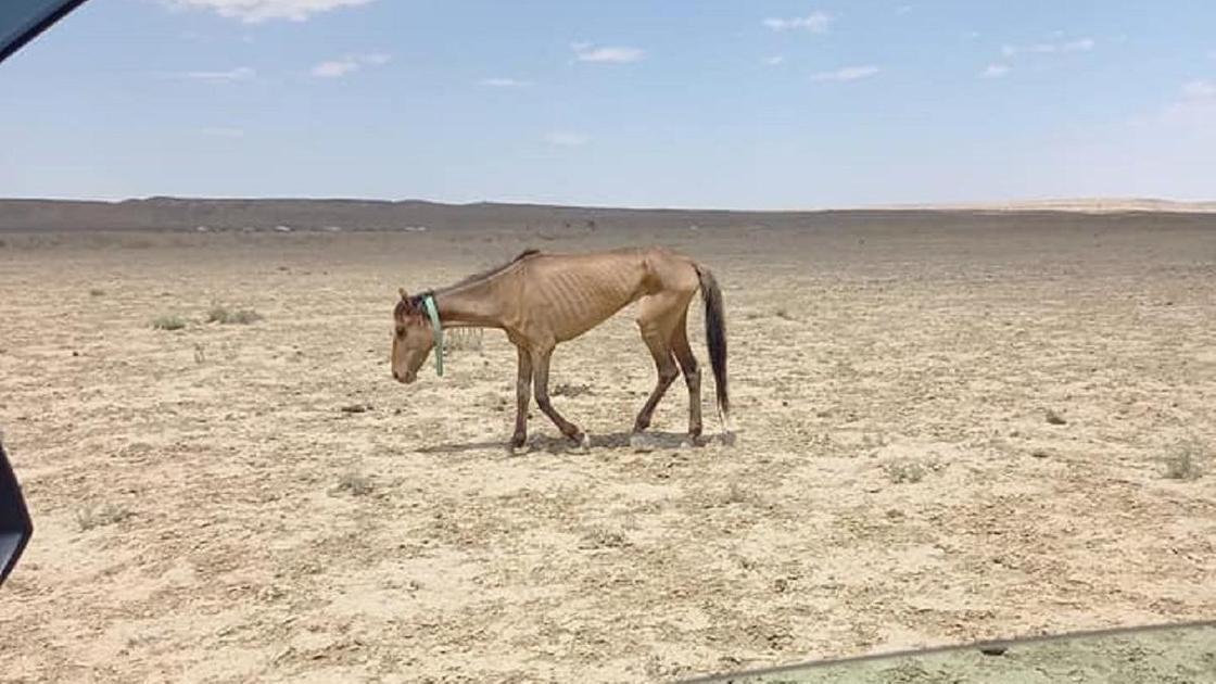 Лошади в Мангистау