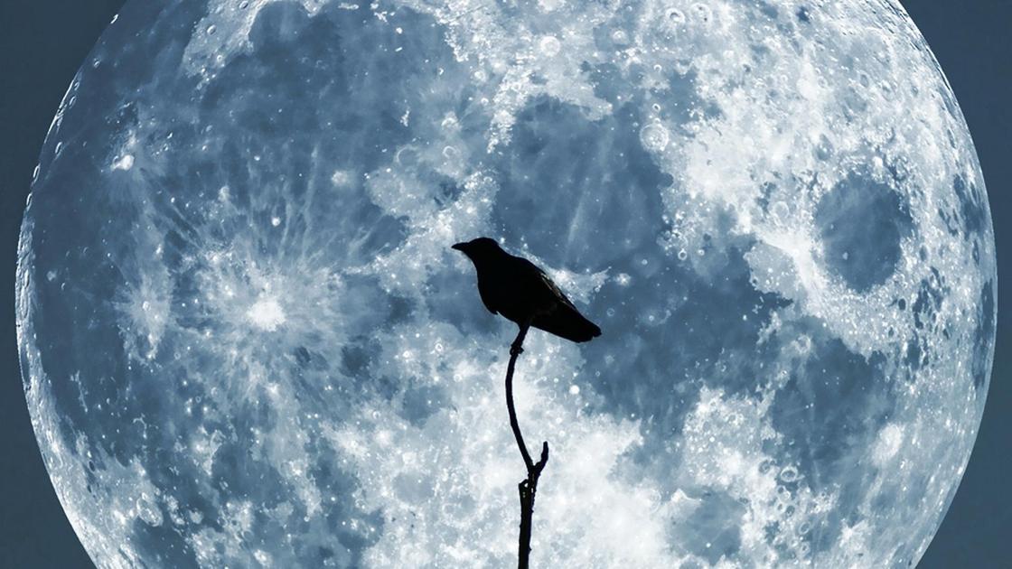 Ворон на фоне полной Луны