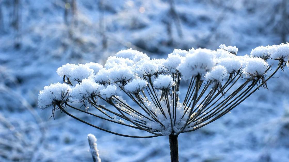 снег лежит на траве