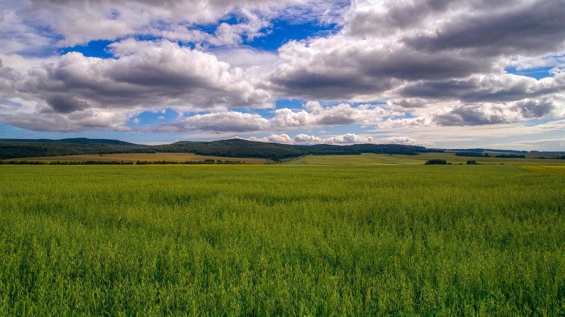Зеленая трава в поле