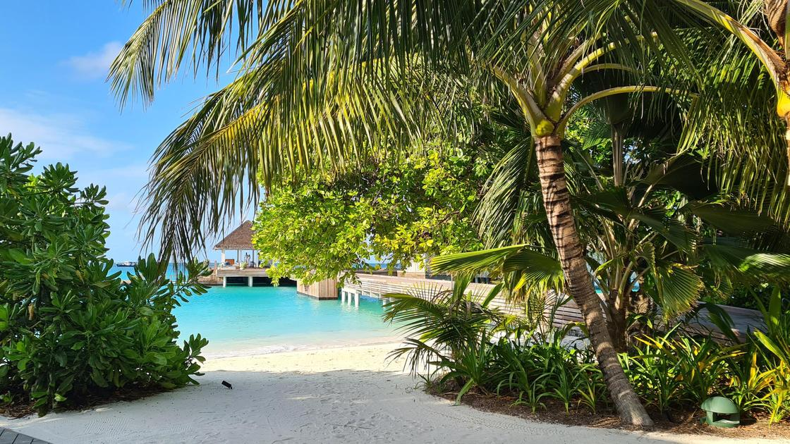 Пальмы на Мальдивах
