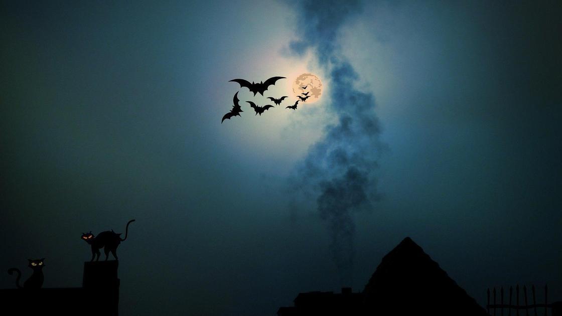 Летучие мыши в небе на фоне полной Луны