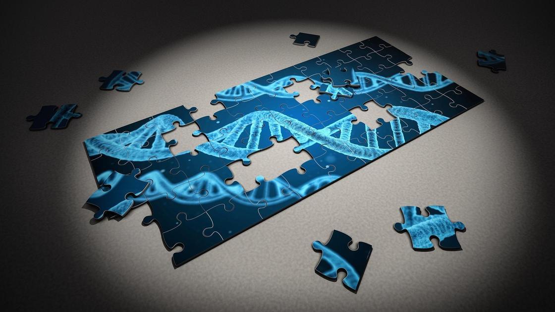 Головоломка с изображением ДНК