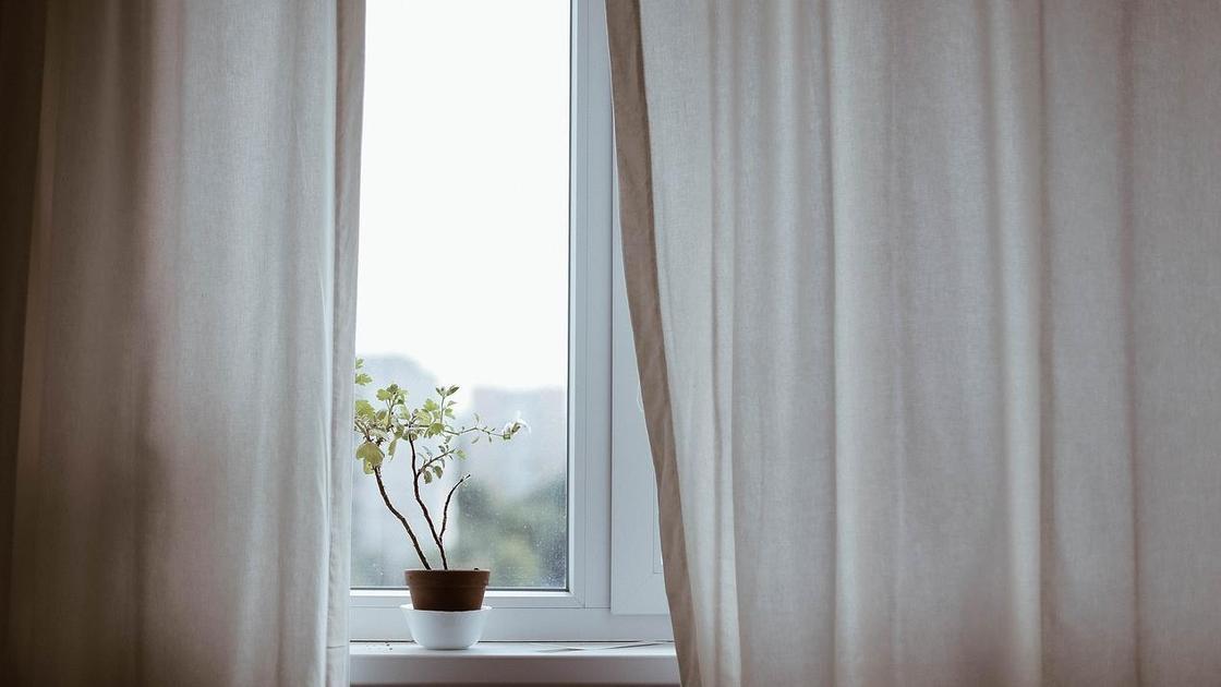 Пластиковое окно с цветком на подоконнике