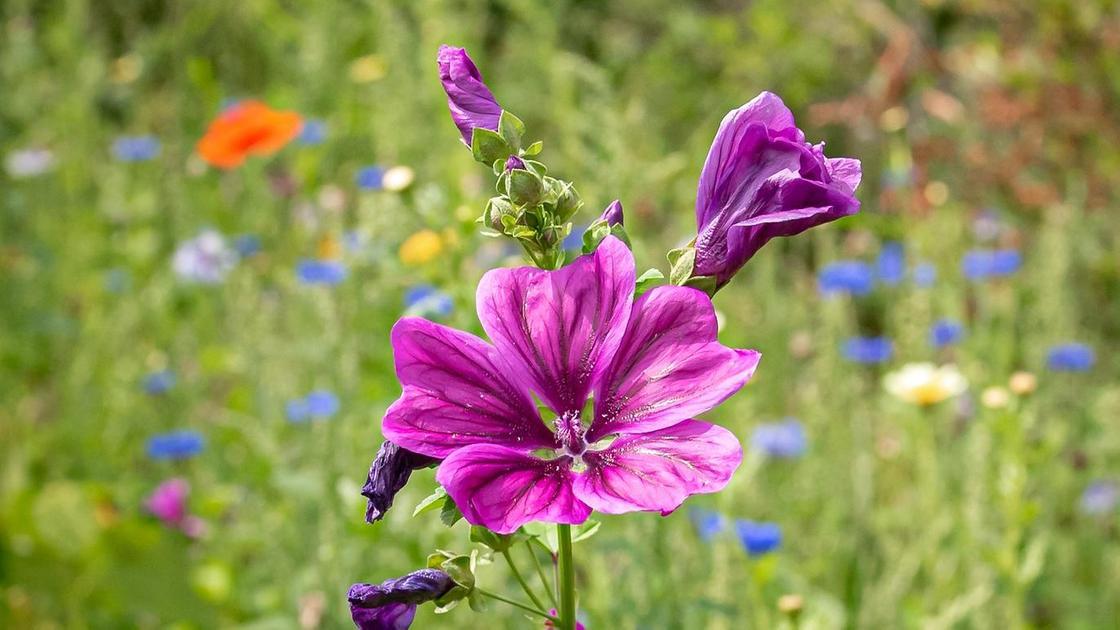 цветок на лугу
