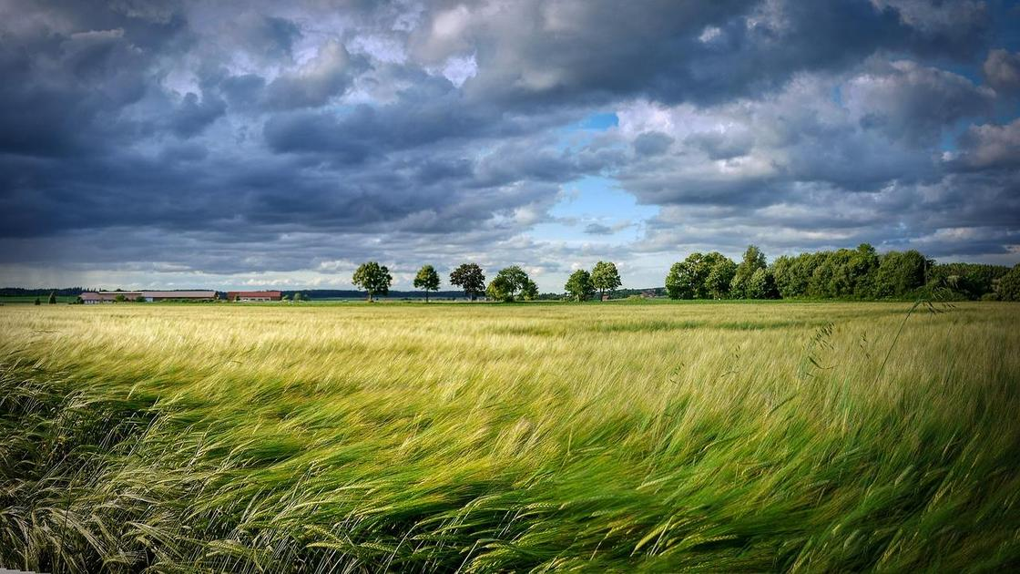 Ветер в поле