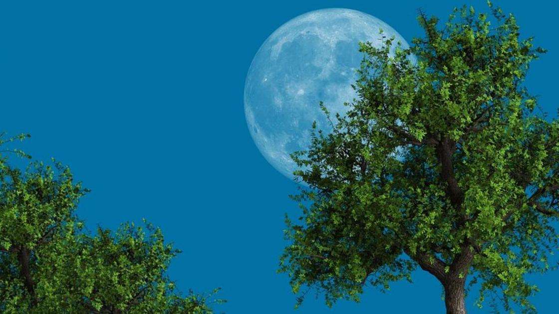 Луна и дерево