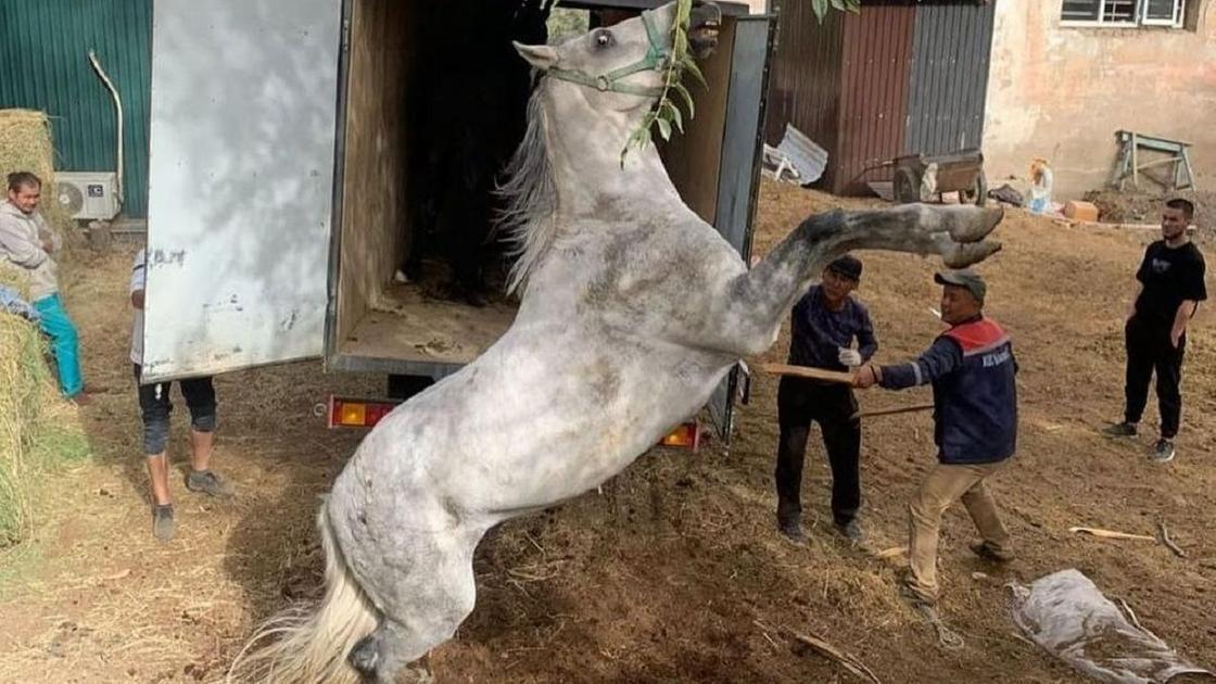 "Люди бьют коня в комплексе ""Тулпар"""