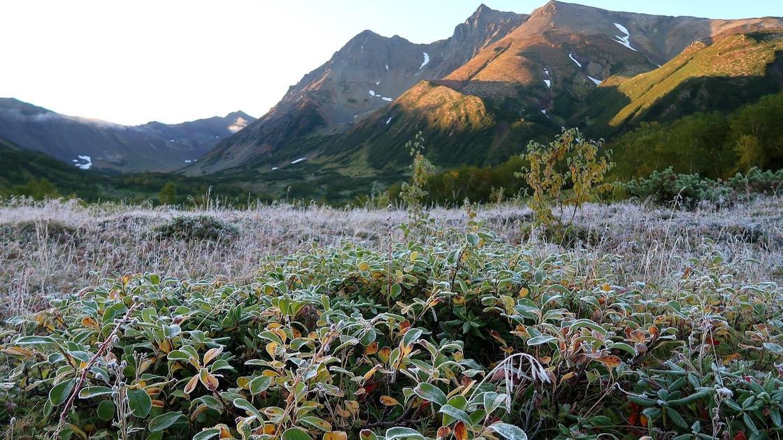 покрытая инеем трава на фоне гор