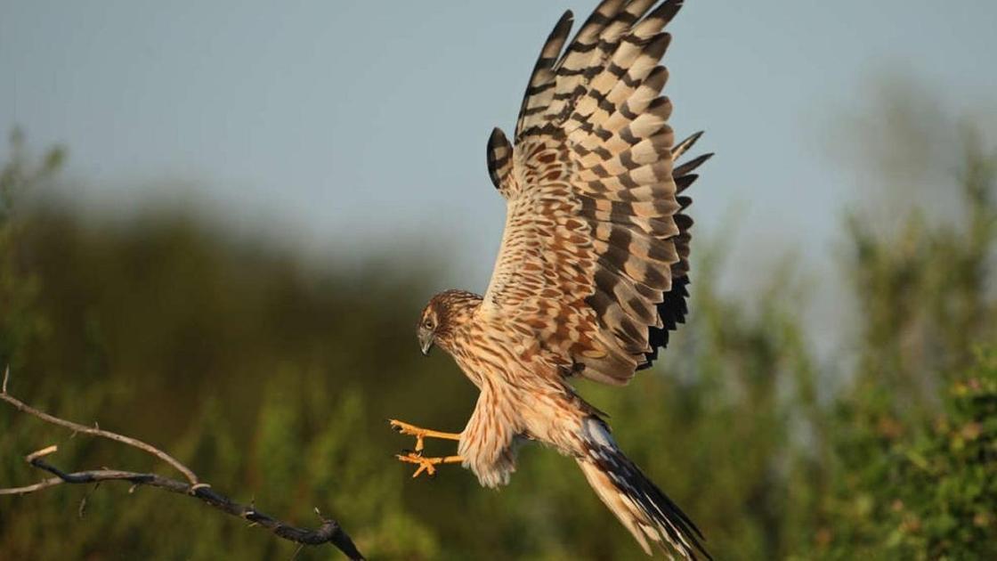 Птица в Наурзумском заповеднике