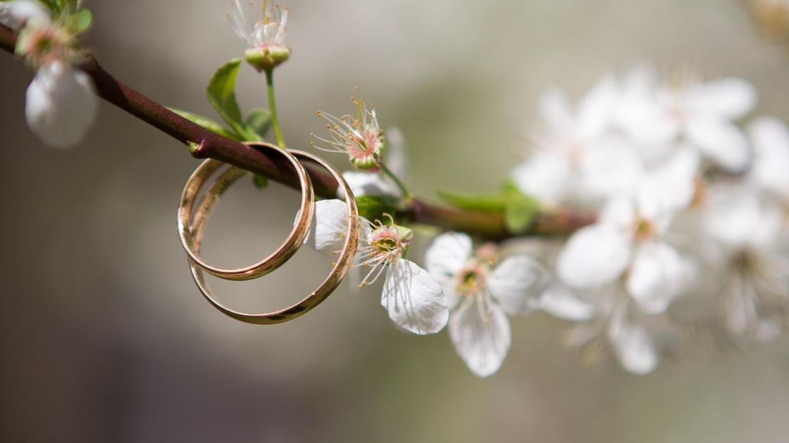 Обручальные кольца на ветке дерева