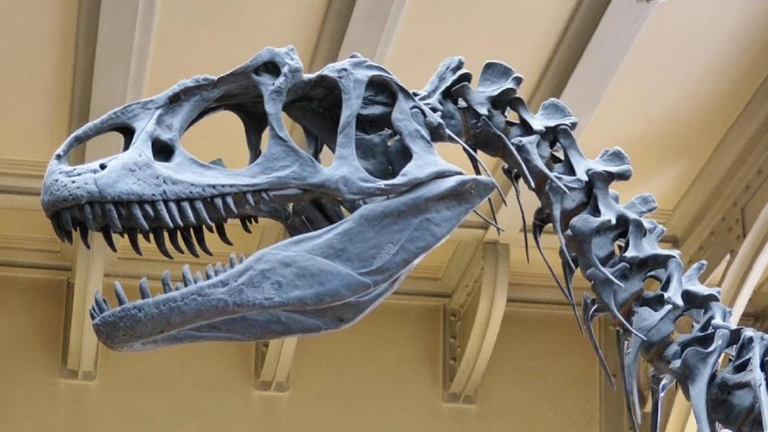 Динозавр1