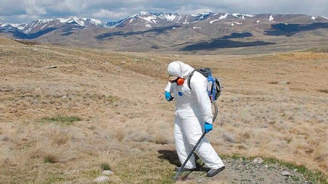 У границ Казахстана обнаружили возбудителя бубонной чумы