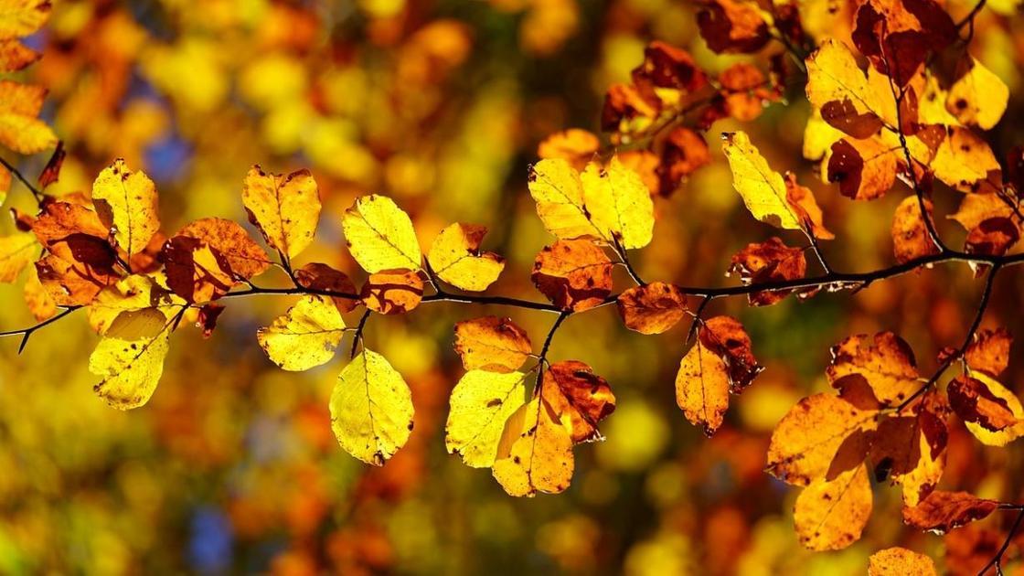желтые литься на ветке дерева