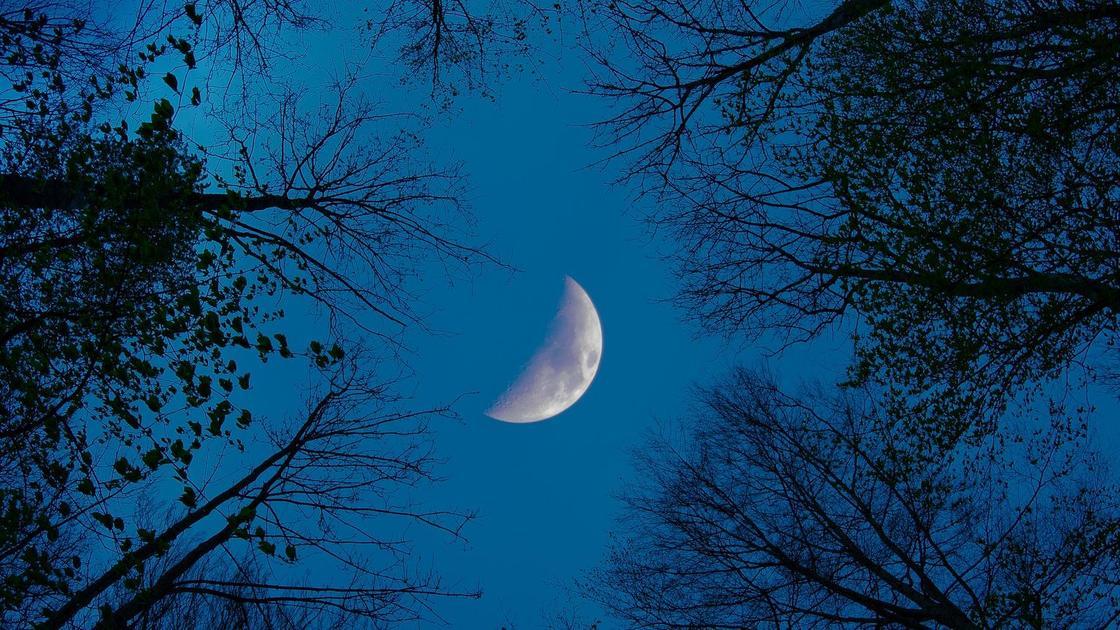 Луна и деревья
