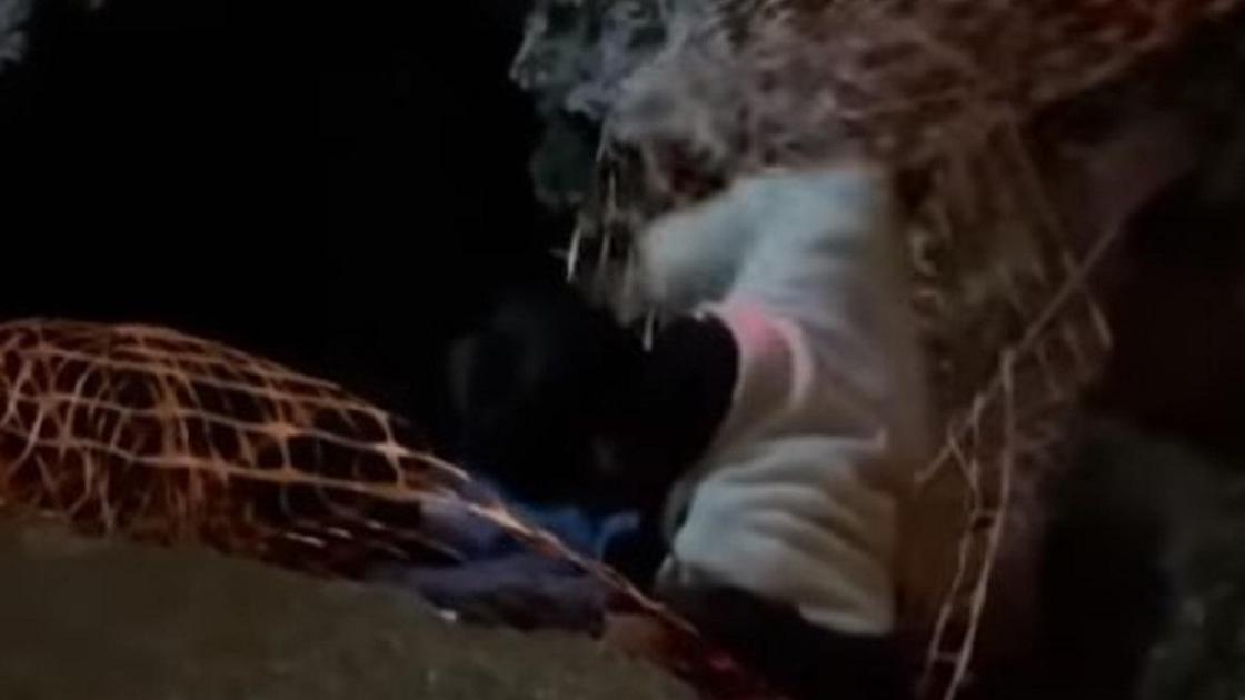 Парень упал в яму