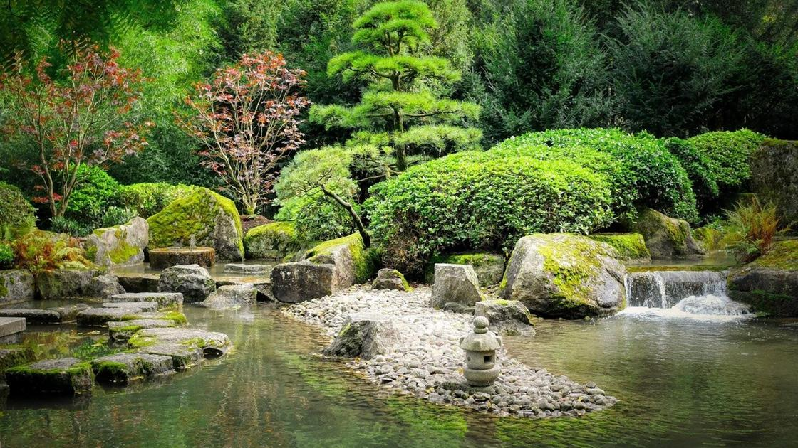 Пруд в саду с растущими на берегу зелеными деревьями и красными кустами