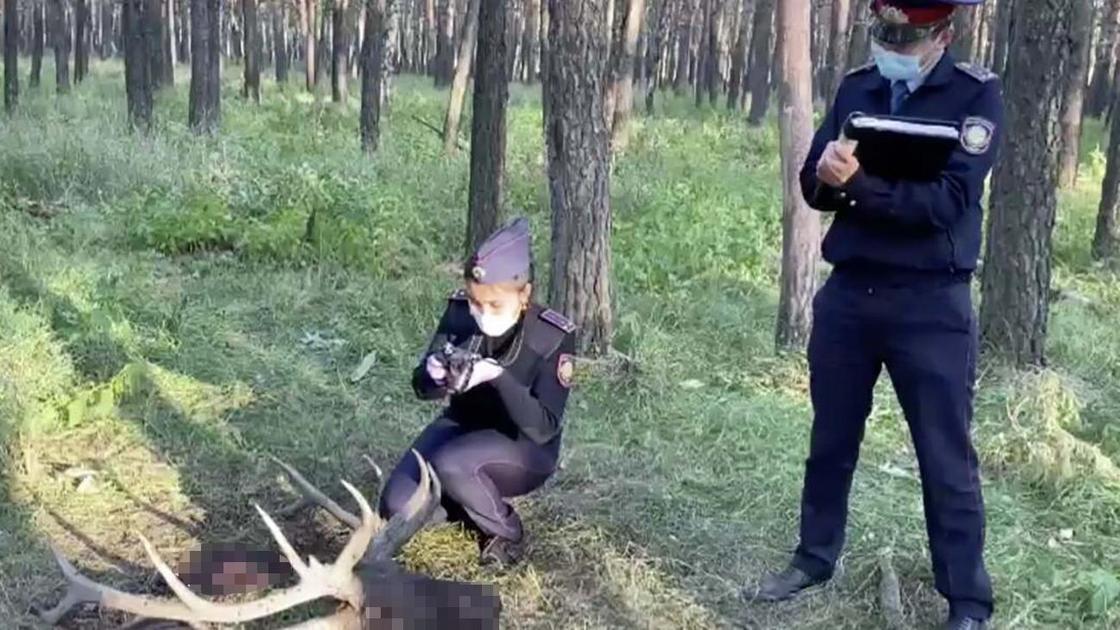 Полицейские у головы марала в лесу