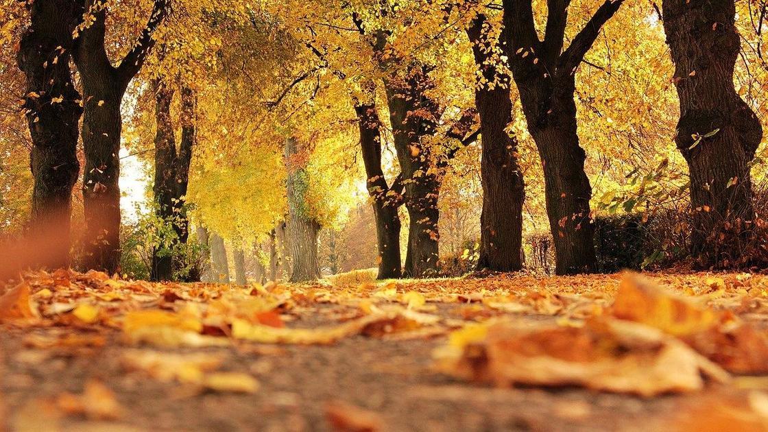 Сухие листья упали с деревьев