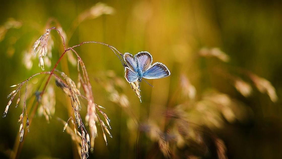 бабочка на растении