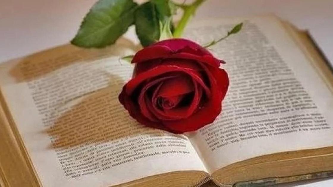 Роза на раскрытой книге