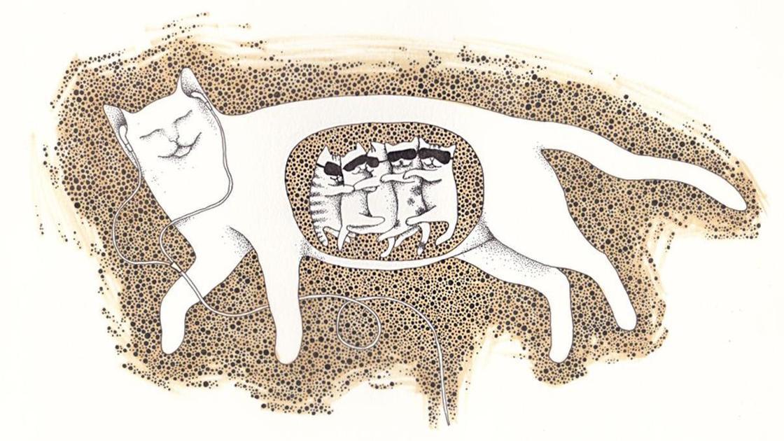 беременная кошка (рисунок)