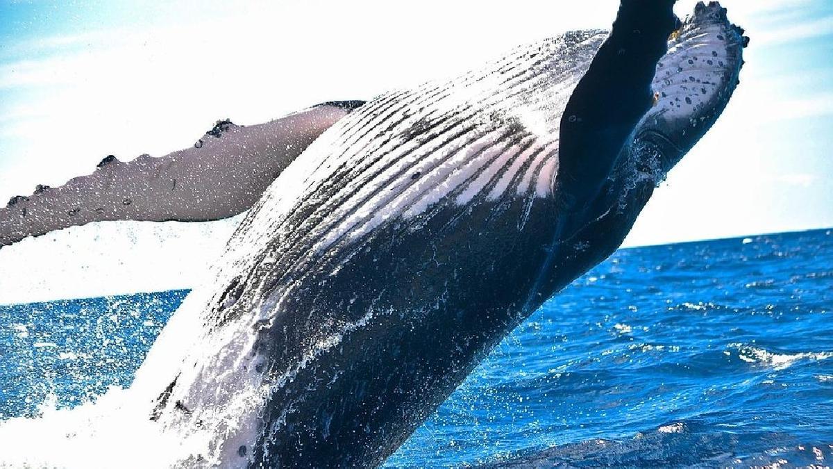Самое большое животное в мире: список  Самое Маленькое Животное в Мире