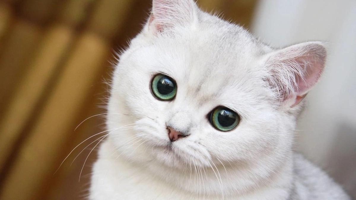 Какая кличка у моей кошки thumbnail