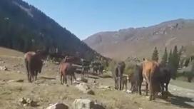 Пропавшие лошади в Алматинской области