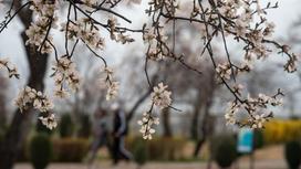 Цветы распустились на ветке дерева