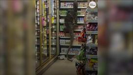 Гигантская ящерица в Таиланде