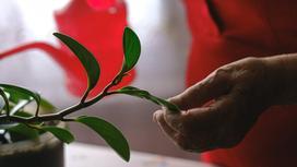 Пожилая женщина поливает цветы в доме