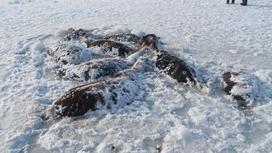 Лошади, вмерзшие в лед на озере