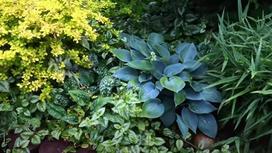 Кусты с красивыми листьями в затененном месте