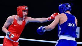 Молодые боксеры