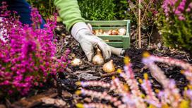Девушка высаживает луковицы осенью