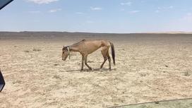 Исхудавшая лошадь бредет по степи