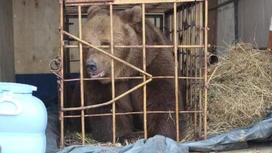 Медведица в Костанайской области