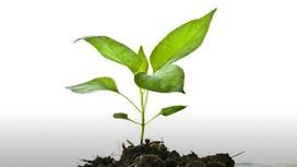 Зеленое растение тянется из земли