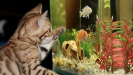 кот и аквариум с рыбками