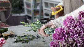Флорист обрезает стебли у цветов