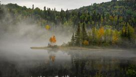 Туман накрыл деревья в горах