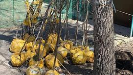 Саженцы стоят возле дерева
