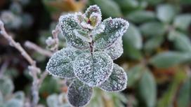 покрытое инеем зеленое растение