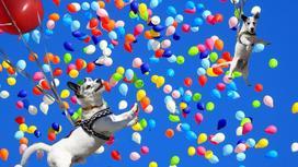 собаки и воздушные шарики