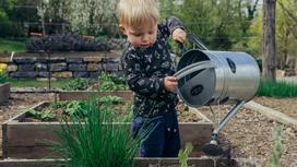 Мальчик поливает из лейки огородные растения