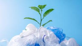 Зеленый росток, пластик и полиэтилен