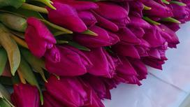 Тюльпаны лежат на столе
