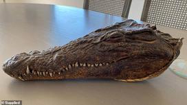 Голова крокодила, подаренная принцем Филиппом